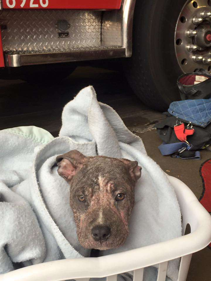 Puppy was sad at shelter, then the firefighter who saved her from neglect shows up